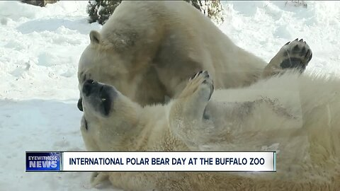 Polar bears Luna and Sakari have a blast in the winter weather
