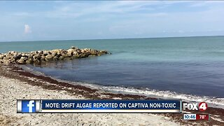 Seaweed partially clogging up Southwest Florida beach