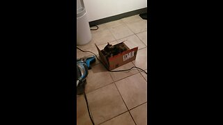 Fearless kitten plays with the vacuum cleaner - Video