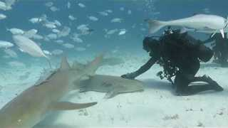 Diver Pets Nurse Shark in The Bahamas - Video