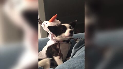 Dog isn't Happy About his Outfit