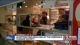 Humane Society offering adoption discounts on cats, dogs - Video