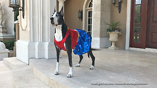Great Danes models 'Wonder Woman' Halloween costume