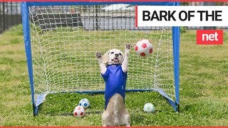 Talented dog attracts worldwide attention with incredible goalkeeping skills