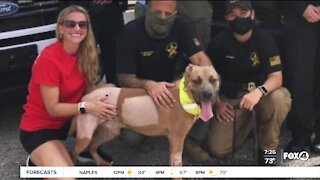 Severely tortured dog becomes Lee County's newest Deputy Dog