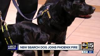 Phoenix Fire welcomes new search dog - Video