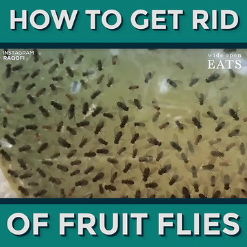 How to Get Rid of Fruit Flies in 5 Ways That Actually Work