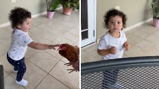Little girl attempts to pet a chicken with hilarious results