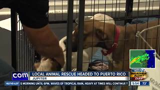 Jupiter animal rescue group headed to Puerto Rico to help pets - Video