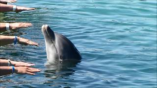 Hands-on dolphin show wows spectators - Video