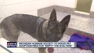 How to adopt a pet for free through the Michigan Humane Society - Video