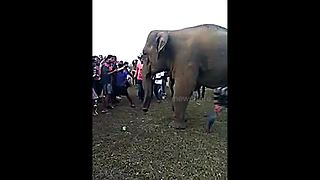 Police search for man who ran through legs of wild elephant - Video