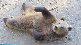 Friendly bears wave hello to park visitors - Video