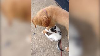 A Puppy And A Kitten Make The Best Of Friends - Video