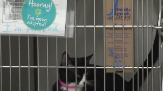 Animal Foundation waiving adoption fees for Aug. 18 event
