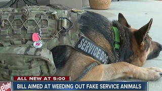 Legislation aims to stop phony service dogs - Video