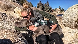 This dog loves kisses  - Video