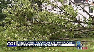 Trees down throughout Baltimore County causes minor damage