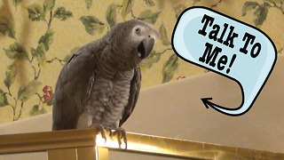 Einstein the Parrot wants you to talk to him - Video