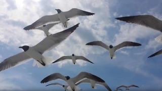 Little girl plays with seagulls at the beach - Video
