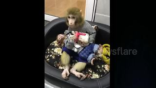 Monkey bottle feeds her baby milk - Video