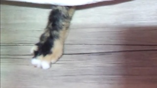 Hidden cat attacks finger  - Video