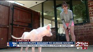 Abused puppy brought to humane society - Video