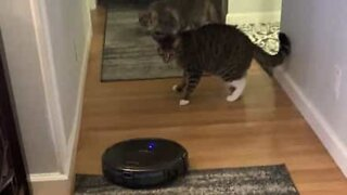 Cat is terrified of robot vacuum cleaner