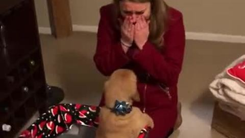 Husband surprises wife with Golden Retriever for Christmas