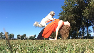 Highlight reel captures Shih Tzu's collection of tricks