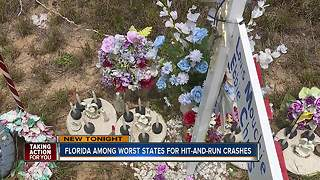 Florida one of worst states for deadly hit-and-runs, new study shows - Video