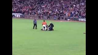 Giants Star Body Slams Field Invader to the Ground - Video