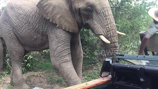 Extremely close encounter with elephants