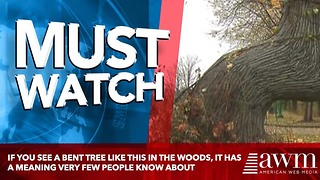 If You See A Bent Tree Like This In The Woods, It Has A Meaning Very Few People Know About - Video