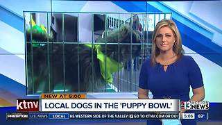 Meet the Las Vegas dogs playing in Sunday's Puppy Bowl - Video