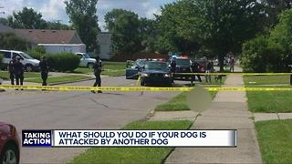 What should you do if your dog is attacked by another dog - Video