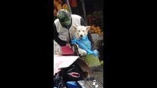 Elderly Man Protects His Devoted Dog From The Rain With Plastic Bag - Video