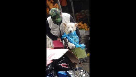 Elderly Man Protects His Devoted Dog From The Rain With Plastic Bag
