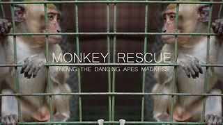 Monkey Rescue - Video