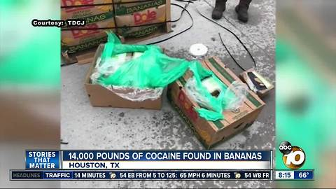 14,000 pounds of cocaine found in bananas