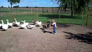 A Wild Goose Chase Fail - Video