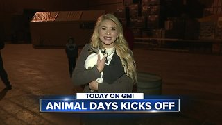 Animal Days preview