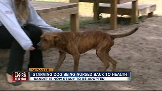 Starving dog being nursed back to health - Video