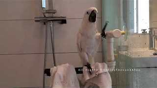 Pampered Cockatoo Enjoys Luxurious Shower - Video