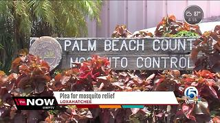 Plea for mosquito relief - Video