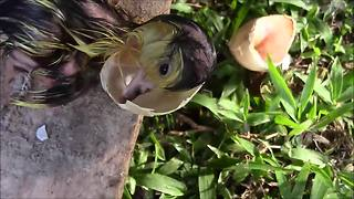 Everyday Hero Helps Duckling Hatch From Its Shell - Video