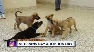 Veterans Day Adoption Event - Video