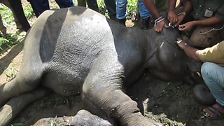 Injured elephant rescue mission-poor wild elephants injured and giving medicine