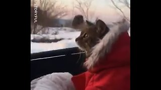 This little kitty can't believe her eyes 🙀❄ - Video
