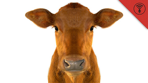 Stuff You Should Know: Internet Roundup: Cow Urine in High Demand & A Superhero Wake